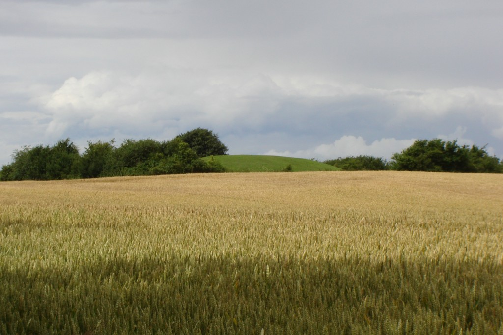 Ladby Ship burial mound in the middle of a farmer's field.