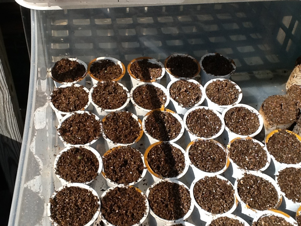 4. Fill with seed starting medium and plant your seeds!