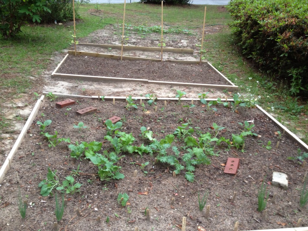 Step 4: Garden beds planted where they used to drive through yard.